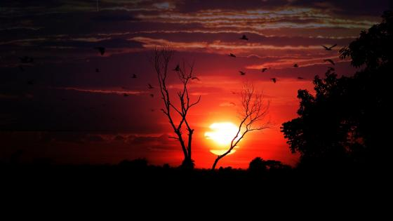 Flying birds silhouette in the sunset wallpaper