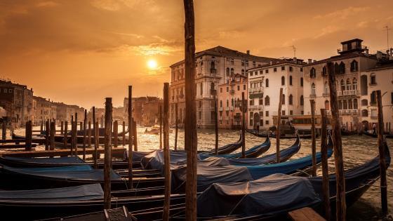 Gondolas in the sunset wallpaper