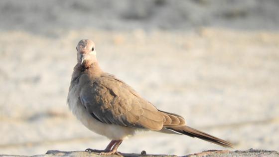 Dove photo wallpaper