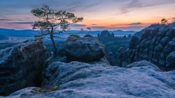 A lone tree on the rocks (Saxon Switzerland National Park) wallpaper