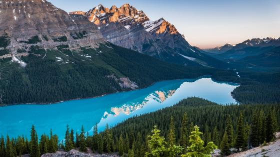 Peyto Lake (Canada) wallpaper