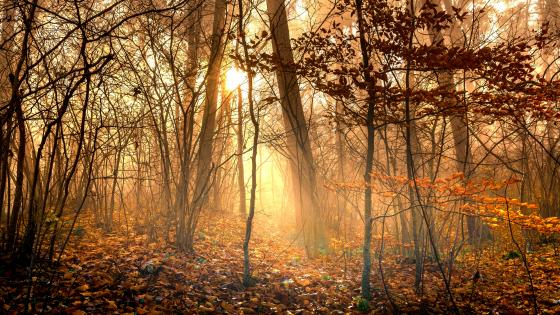 Golden sunlight in the autumn forest wallpaper