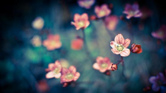 Pink Flower Thing wallpaper