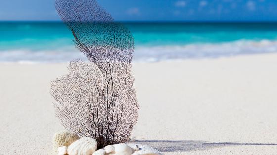 Decoration on the sandy beach wallpaper