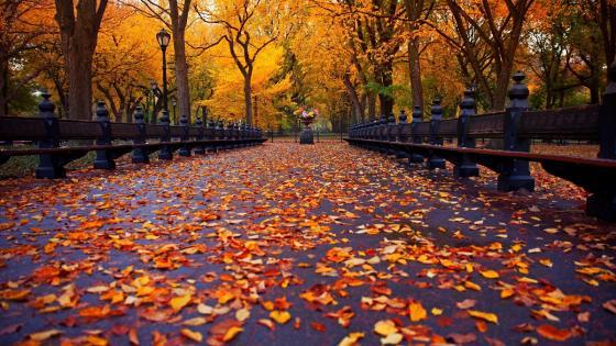 Central Park at fall wallpaper