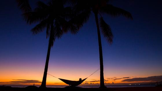 Silhouette of a hammock under the palms wallpaper