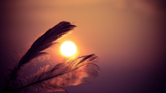 Sunset through feathers wallpaper