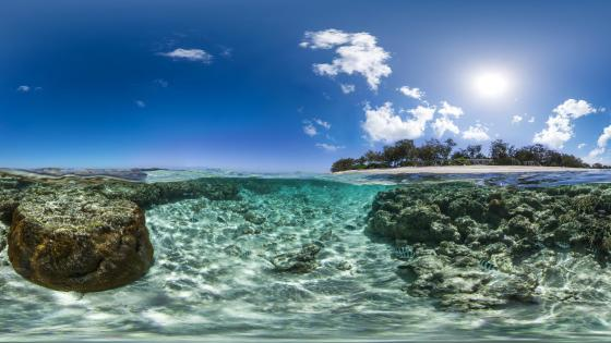 Lady Elliot Island reef wallpaper