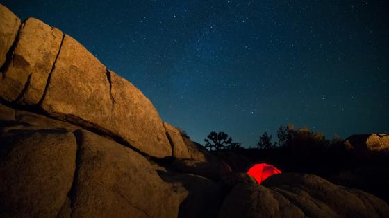 Joshua Tree National Park under the starry sky wallpaper