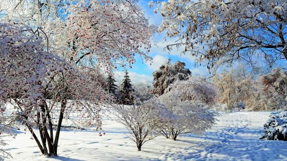 Snowy nature landscape wallpaper