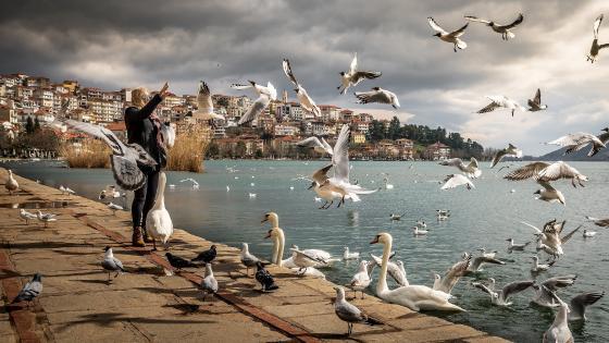 Feeding birds wallpaper