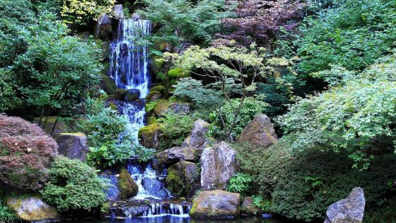 Washington Park, Japanese Garden wallpaper