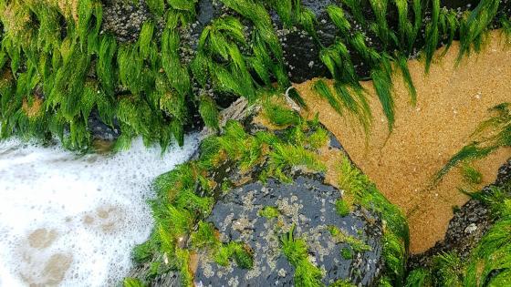 Beach stones - Samsung s8 photo wallpaper