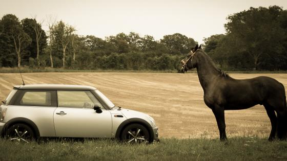 MINI Cooper in front of  a horse wallpaper