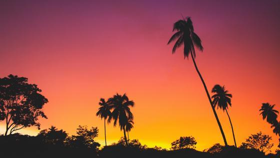 Tropical landscape silhouette wallpaper