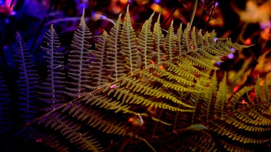 Fern frond wallpaper