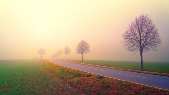 Foggy road wallpaper