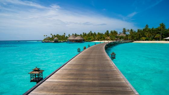 Tropical bungalows in Halaveli, Maldives wallpaper