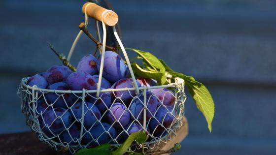 Basket of plums wallpaper
