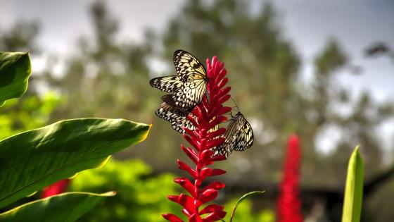 Butterflies on a flower wallpaper