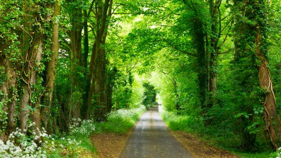 Narrow road in the forest wallpaper