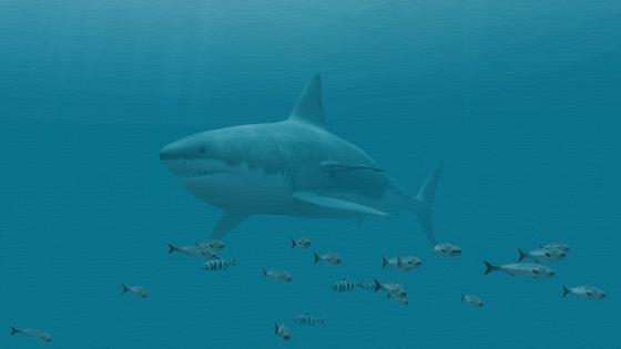 Great white shark 🦈 wallpaper