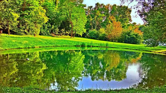 Pond in the green wallpaper