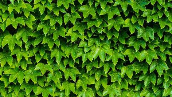 Green fence wallpaper