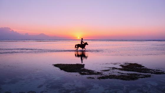 Horseback riding in the sunset wallpaper