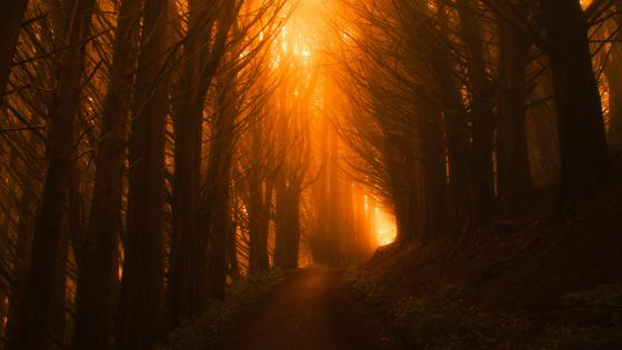 Thick forest pathway wallpaper