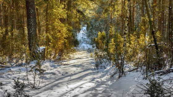 Snowy autumn forest path wallpaper