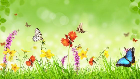 Butterflies on flowers wallpaper