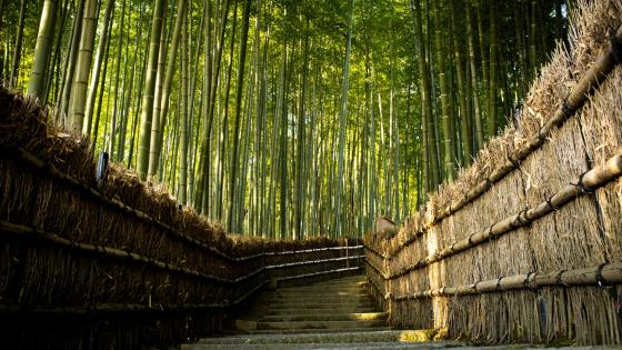 Bamboo forest path wallpaper