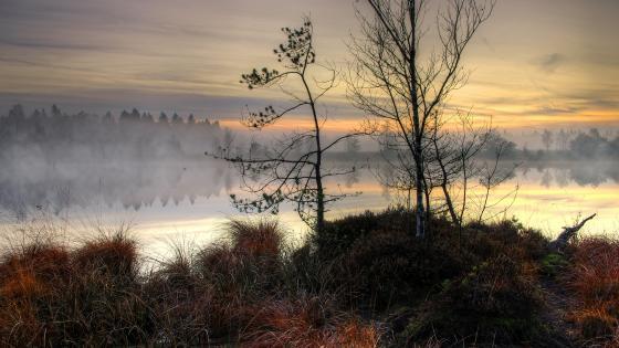 Foggy winter morning wallpaper