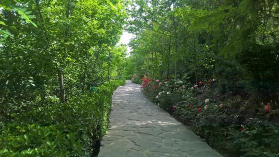 Garden path wallpaper