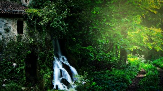 Waterfall in the green forest wallpaper