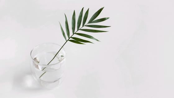 Tree leaf in a glass wallpaper
