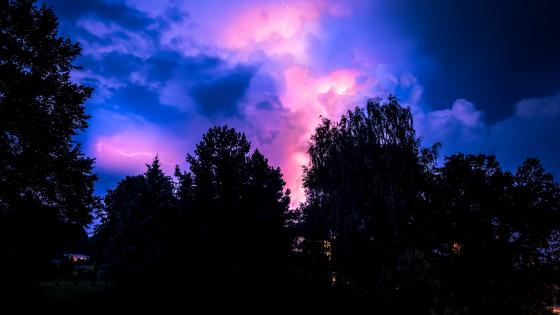Colorful sky above the trees wallpaper