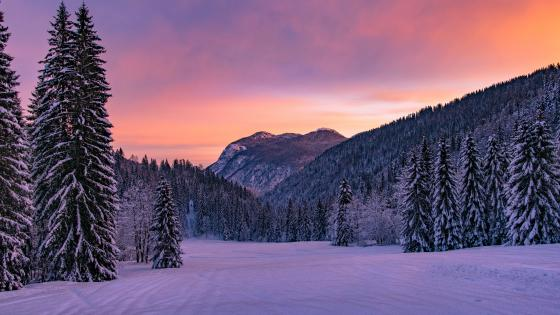 Purple winter sky and landscape wallpaper