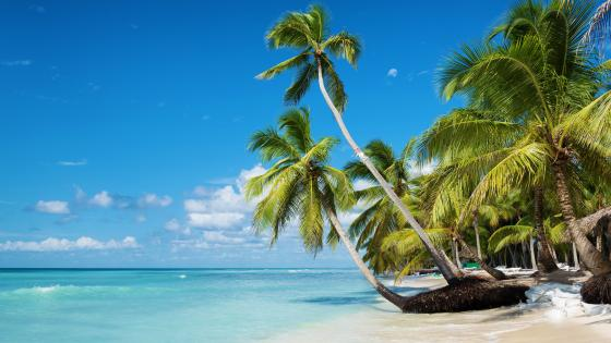 Saona Island wallpaper
