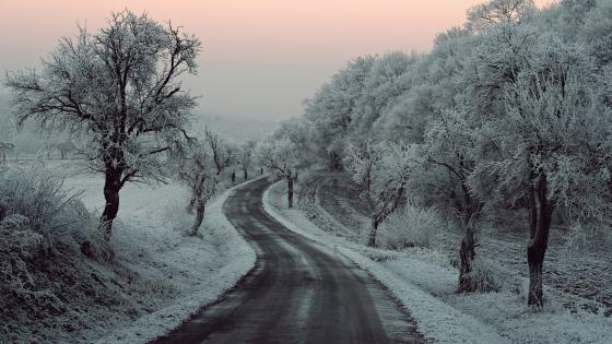 Hoary trees along the road wallpaper