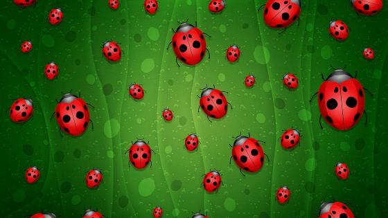 Ladybug pattern wallpaper