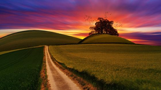 Lone tree on the hilltop wallpaper