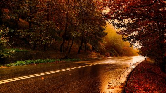 Wet asphalt after the rain wallpaper