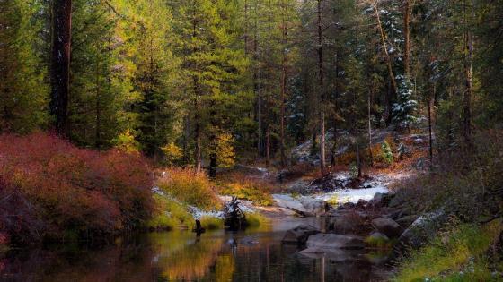 Autumn forest creek wallpaper