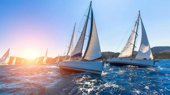 Sailing regatta wallpaper