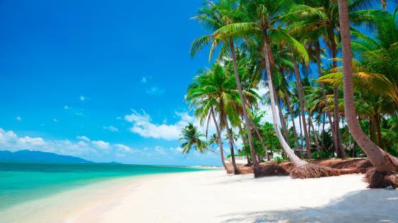 Exotic white sandy beach wallpaper