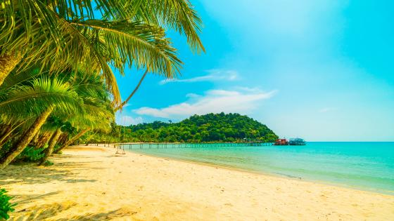 Exotic beach in Anse Lazio 🌴 wallpaper
