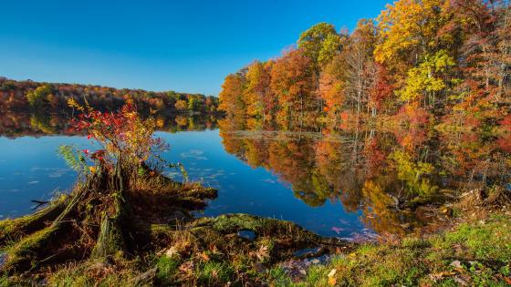 Colorful autumn wallpaper