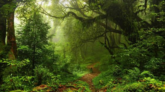 Riparian forest path wallpaper